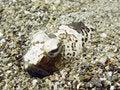 Free Dangerous Fish Royalty Free Stock Photo - 8662945