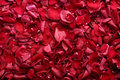 Free Rose-petals Stock Photography - 8667332