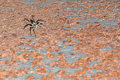 Free Spider On A Rusty Surface. Royalty Free Stock Images - 8667489