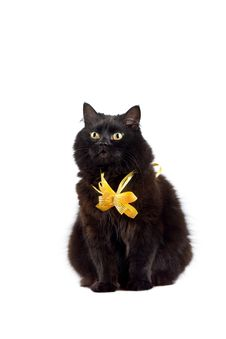 Free Black Cat Wearing Yellow Bow Isolated Royalty Free Stock Image - 8660176