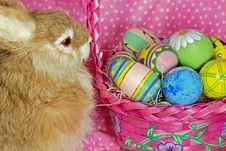 Free Easter Rabbit Royalty Free Stock Image - 8661006