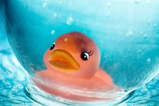 Free Underwater Duck Royalty Free Stock Photo - 8661915