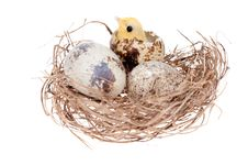 Easter Chick In Nest Stock Photography