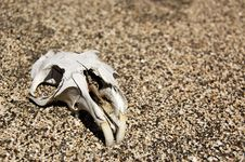 Free Dead Rodent Royalty Free Stock Photo - 8664285