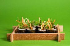 Free Sushi Stock Photo - 8664440