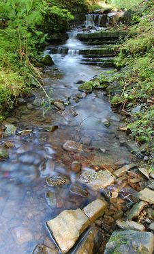 Free Forest Stream Stock Image - 8665561