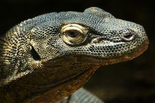 Free Komodo Dragon Stock Photo - 8665760