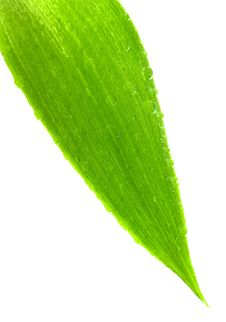 Free Green Leaf Stock Images - 8666274