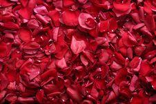 Rose-petals Stock Photography