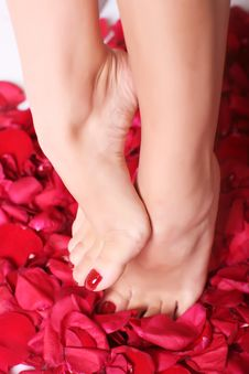 Free Feet And Rose-petals Royalty Free Stock Images - 8667429