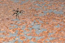 Spider On A Rusty Surface. Royalty Free Stock Images