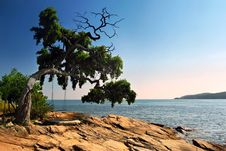Free Seascape With Tree And Swing Royalty Free Stock Images - 8667519