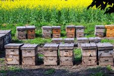 Pengzhou, China: Apiary Bee Colony Royalty Free Stock Image