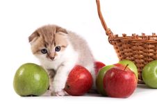 Free Kitten And A Basket With Apples Royalty Free Stock Photos - 8668938