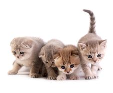 Free The Kittens Royalty Free Stock Images - 8668949