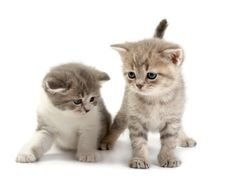 Free The Kittens Stock Photography - 8668972