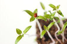 Free Spring Awakening Stock Photography - 8668982