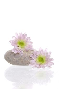 Free Spa Stones And Flower Royalty Free Stock Photo - 8669075