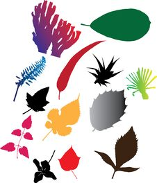 Free Set Icons - 103C. Leaves Stock Photo - 8669300