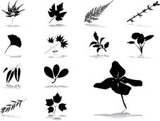 Set Icons - 56. Leaves Stock Images