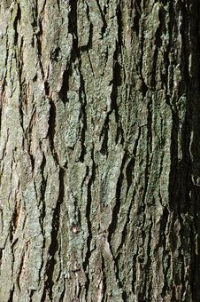 Free Bark Stock Photos - 8669823