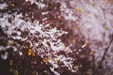 Free First Snow Royalty Free Stock Photo - 86688485