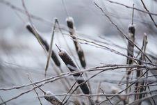 Free Frozen Cattails Stock Photos - 86688803