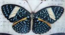 Free Blue-spotted Butterfly Royalty Free Stock Photos - 86688978
