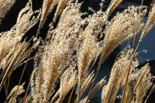 Free Grasses 1 Stock Photos - 86690073