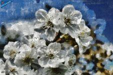 Free Cherries - ID: 16218-130702-3032 Royalty Free Stock Image - 86691766
