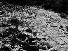 Free Plant, Black, Bedrock, Natural Landscape Royalty Free Stock Image - 86692616