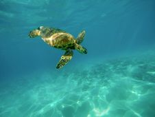 Free Sea Turtle Swimming Underwater During Daytime Royalty Free Stock Photos - 86694008