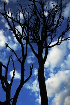 Free Dead Trees Under White Cloudy Blue Sky Stock Photo - 86697260