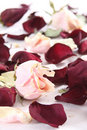 Free Dry Rose And Petals Stock Images - 8673404
