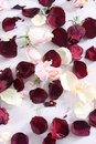 Free Dry Rose And Petals Stock Photo - 8673450