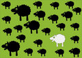 Free Sheep Stock Images - 8679854