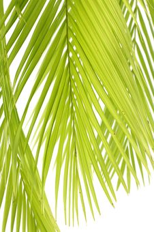 Free Palm Stock Image - 8671971