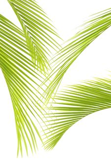 Free Palm Stock Photo - 8672010