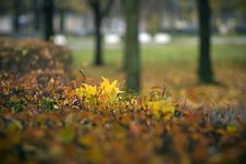 Free The Russian Autumn Stock Photos - 8673703