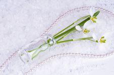 Free Spring Decoration Stock Photos - 8674813