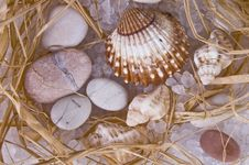 Free Stones And Shells Royalty Free Stock Images - 8674919