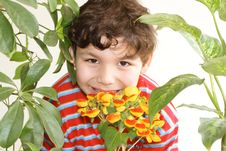 Free Flowers And Boy Royalty Free Stock Images - 8675509