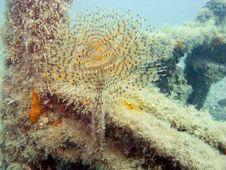Free Sea Kokerworm Stock Image - 8676491