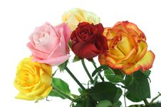 Five Roses. Stock Images
