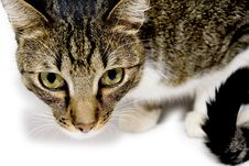 Free Cat Royalty Free Stock Images - 8679119