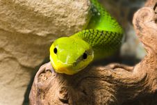 Free Red Tailed Racer Royalty Free Stock Photo - 8679905