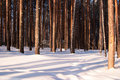 Free Winter Forest Stock Photos - 8684813