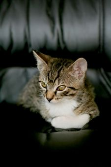 Free Cat Looking From Below Stock Photos - 8680103