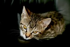 Free Cat Looking From Below Royalty Free Stock Image - 8680126