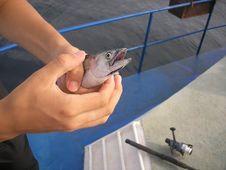 Free Fishing Stock Photography - 8684992